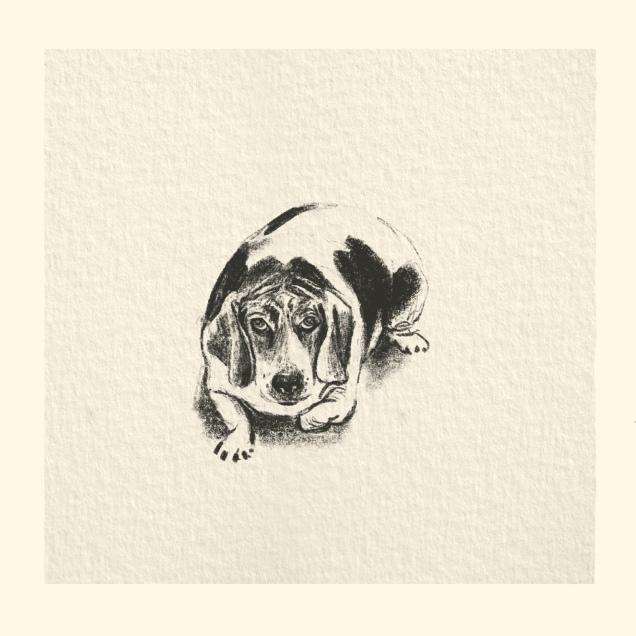 étude pour le maitre d'un Beagle crayon noir