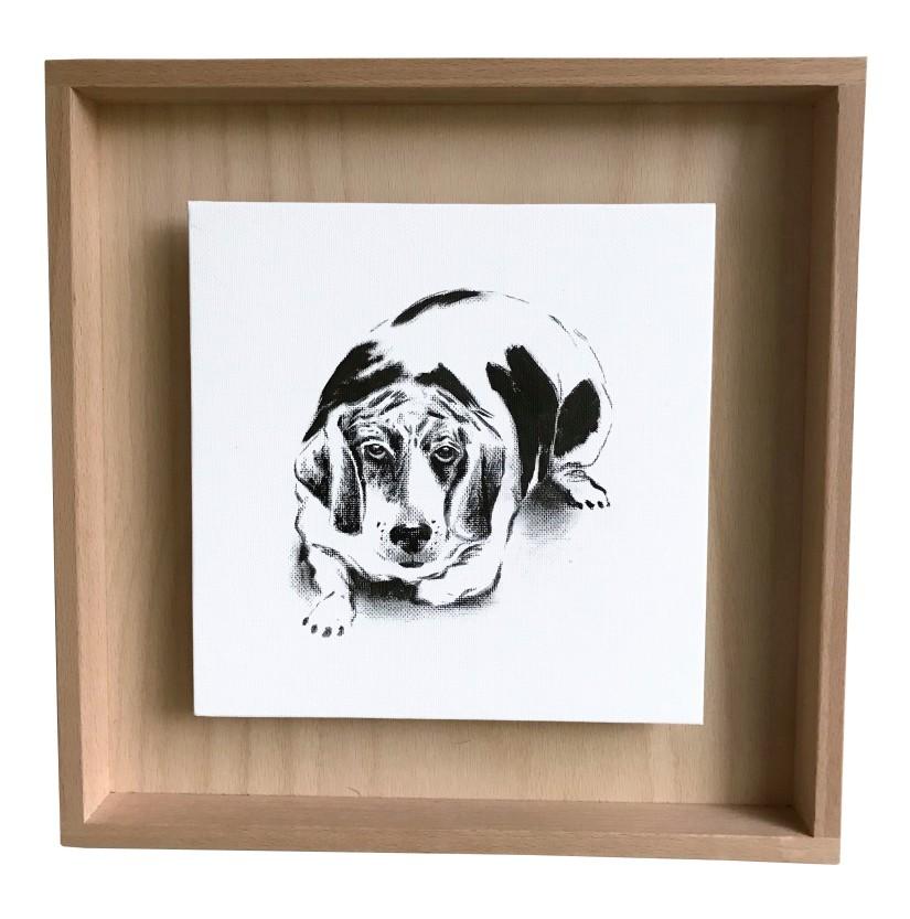 portrait d'un beagle obèse