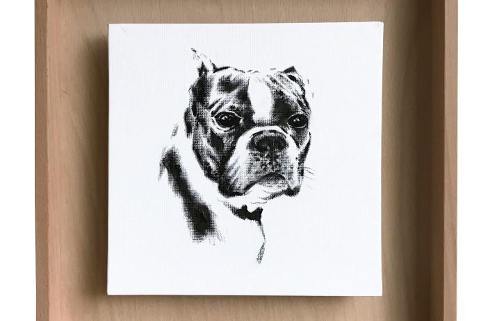 portrait de Jude mon boston terrier