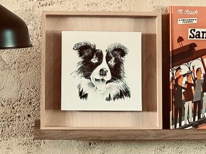 photo d'un portrait d'un border collie sur étagère