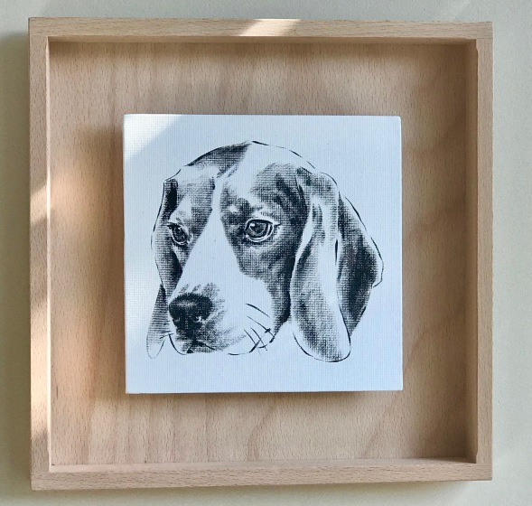 portrait d'un Beagle en noir et blanc