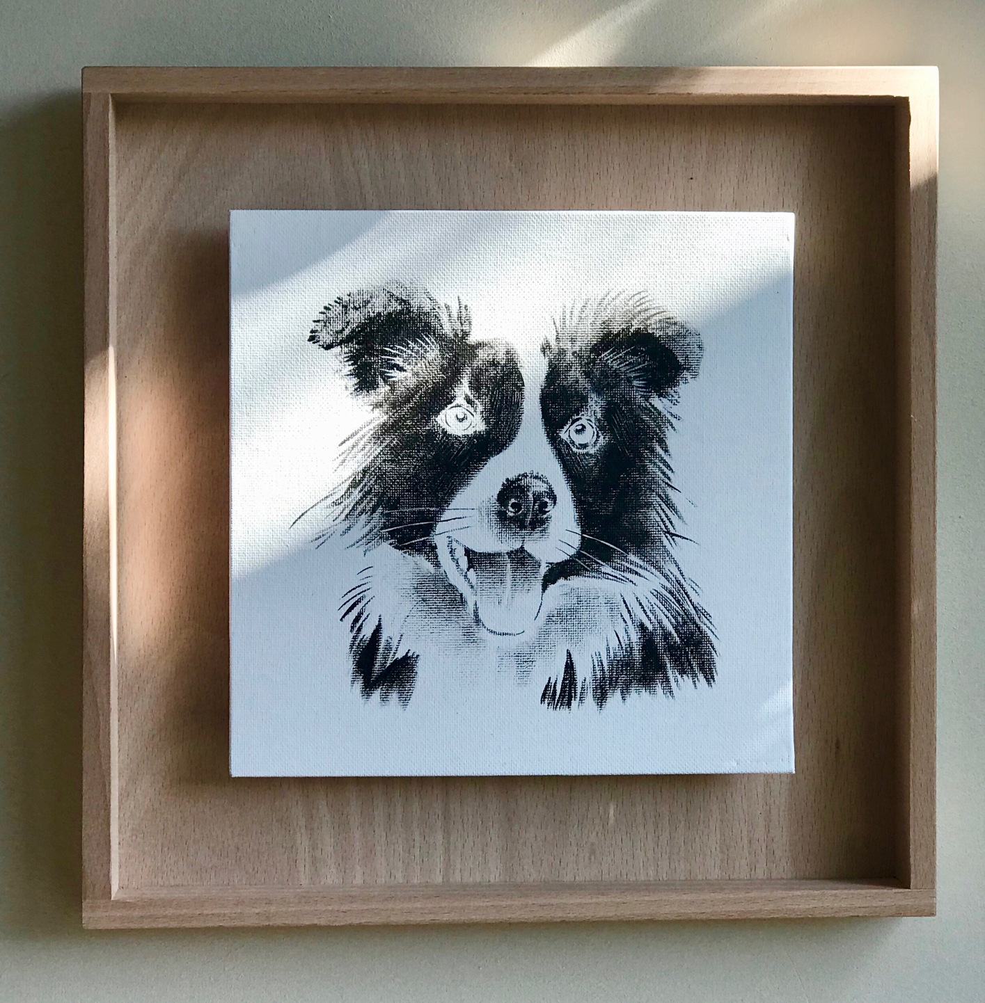 portrait d'un Border collie en noir et blanc