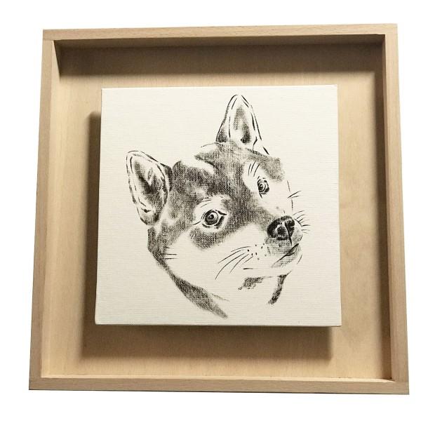 portrait d'un schiba inu en noir et blanc