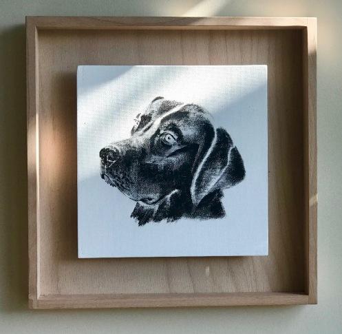 portrait d'un labrador en noir et blanc